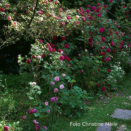 Garten Spalier mit gut ideen für ihr haus design ideen
